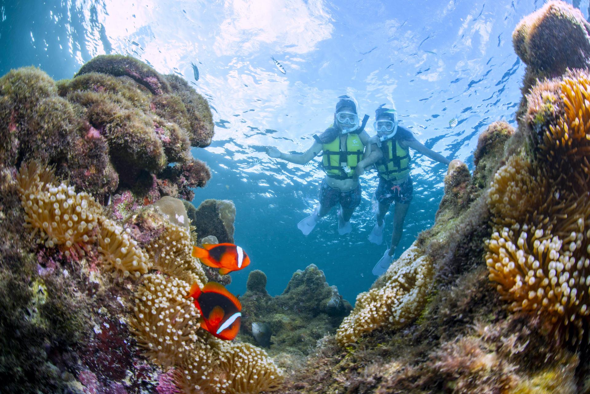 サンゴとお魚4.jpg