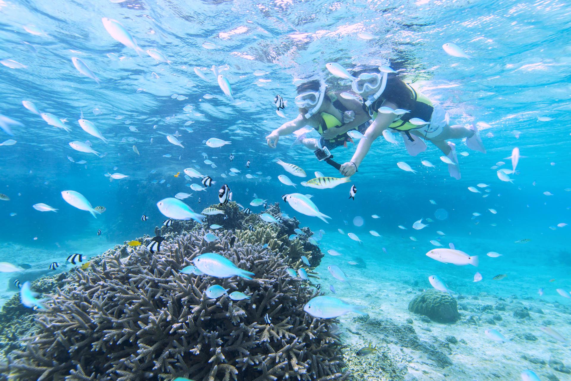 サンゴとお魚1.jpg