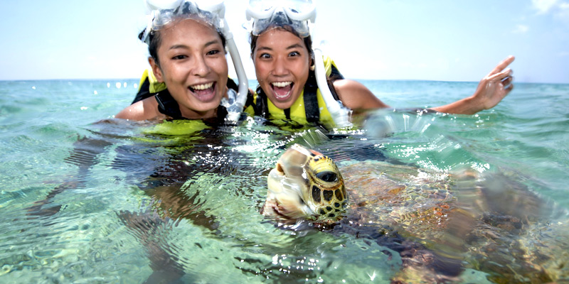 바다 거북과 헤엄치는 스노클링 투어